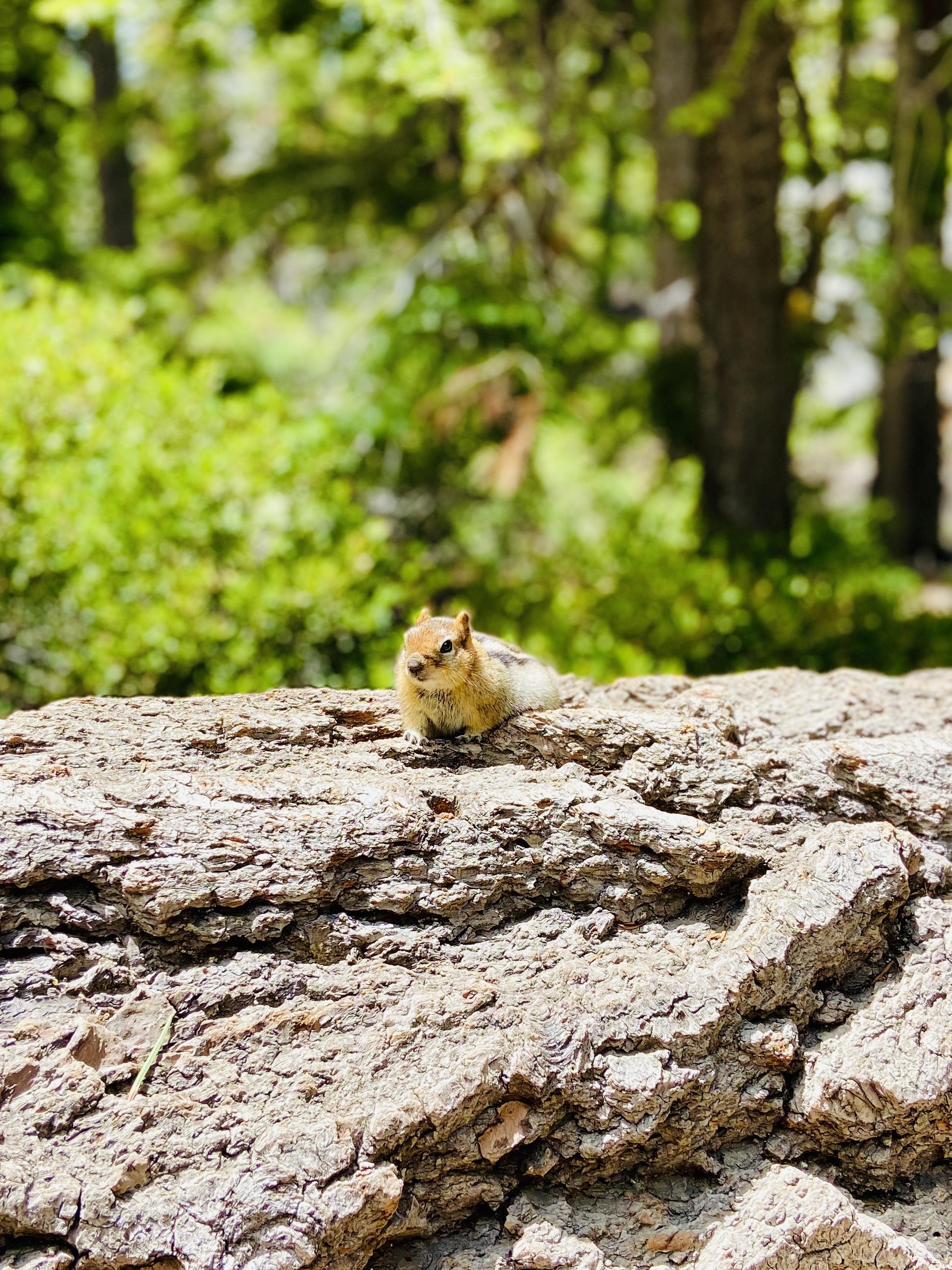 wildlife while hiking