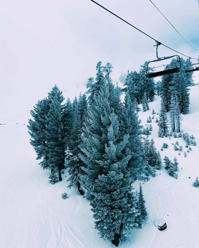 Squaw Valley Tahoe trees