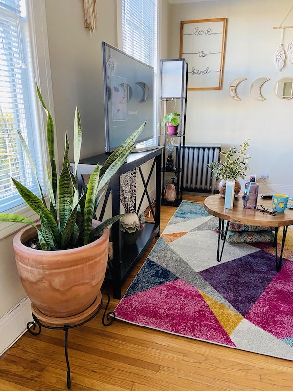 Snake plant in hippie apartment San Francisco