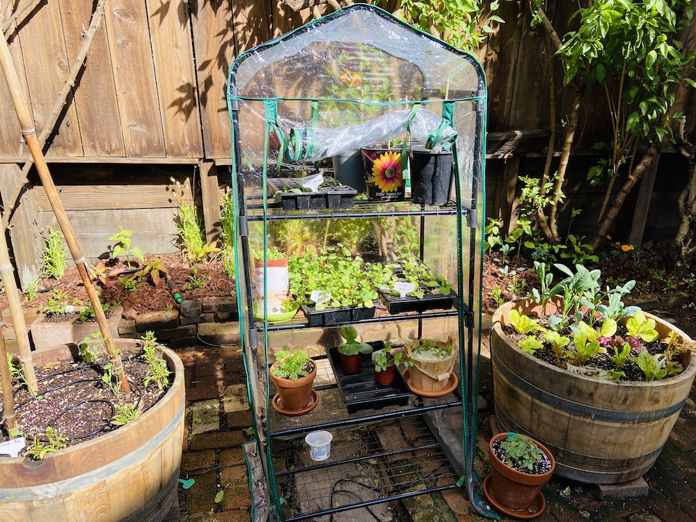 Greenhouse for backyard garden