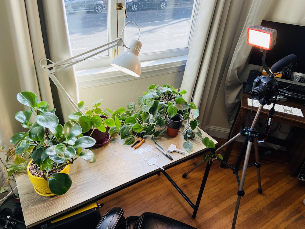 Filming a plant tutorial on propagating plants