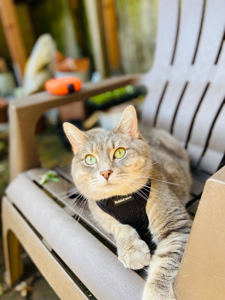 Cat chilling on a garden chair
