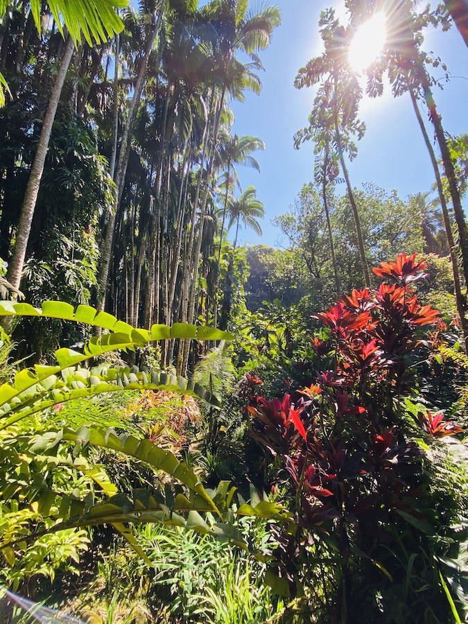 Hawaii Botanical Garden