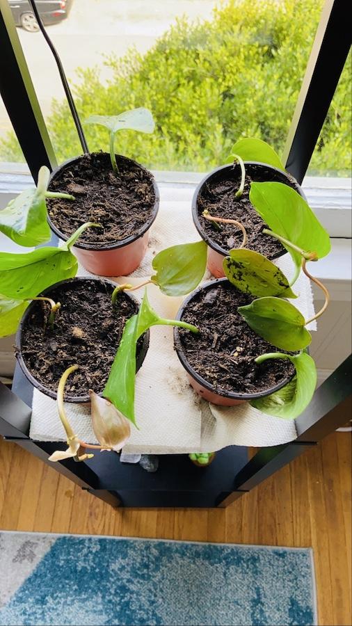 Plant propagations