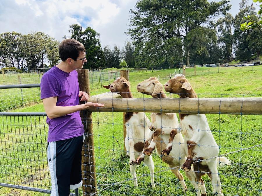 Playing with goats in farm on Waimea