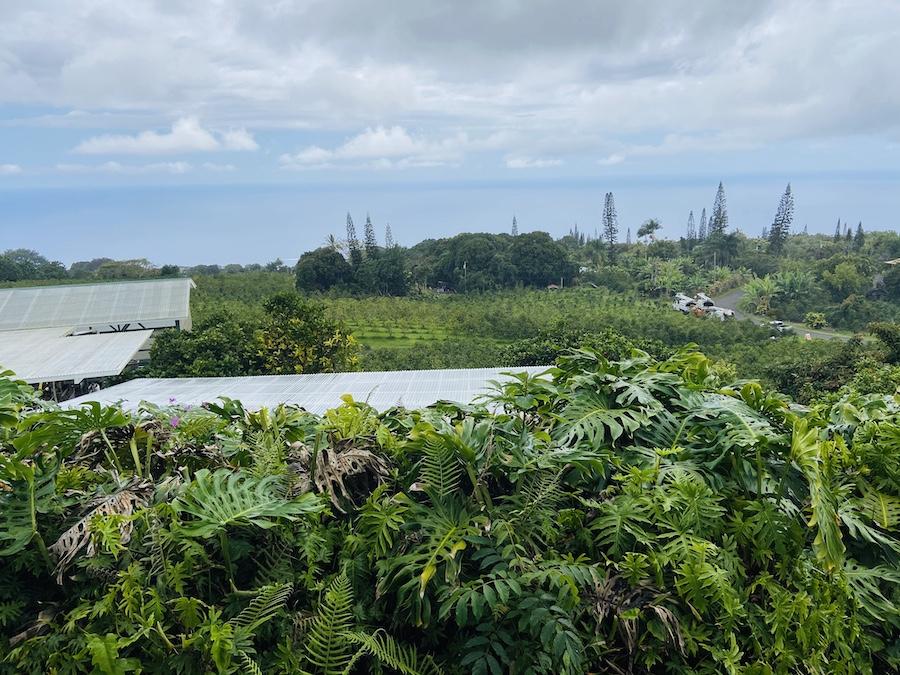 Hawaiian Kona Coffee Farm
