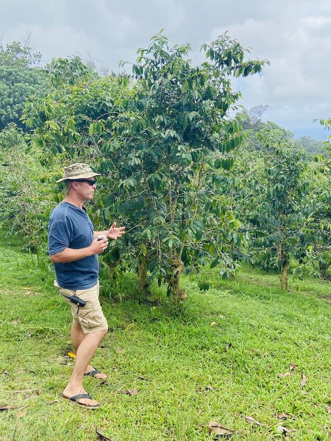 Tour on Hawaiian Kona Coffee Farm