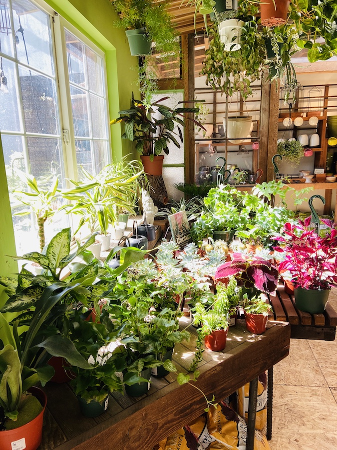 Plant store on Valencia St