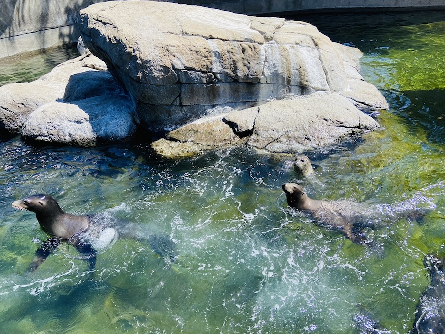 Sea lions at six flags