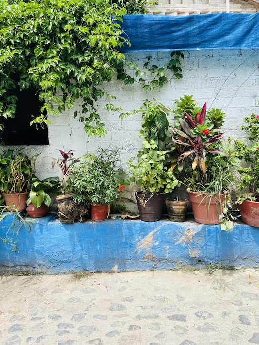 Local plants in pots in Mexico
